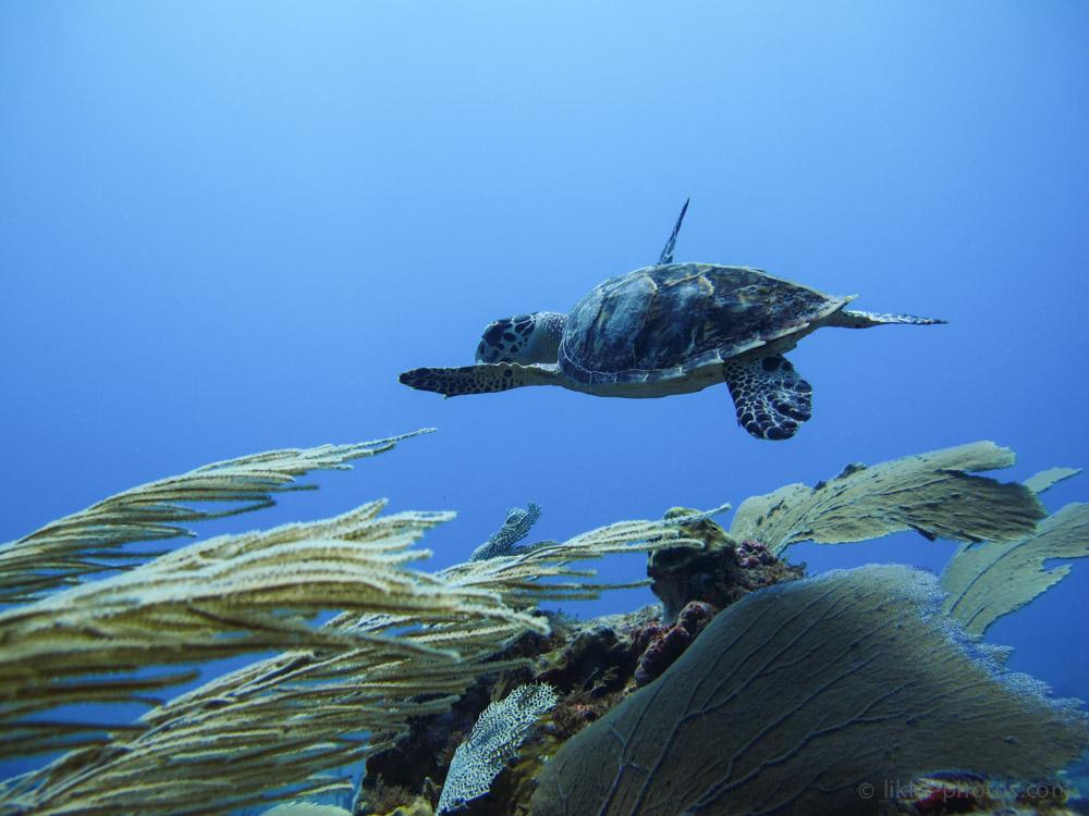 Scuba Diving - Basse Espagnole - Tintamarre - St Martin