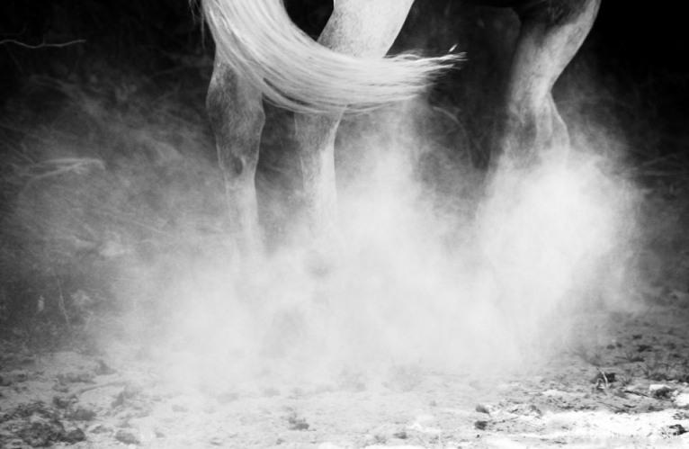 Horses-22.jpg