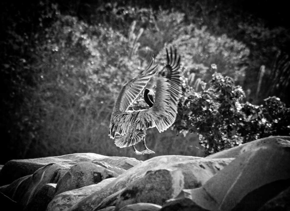 Bird-Caribbean-3.jpg