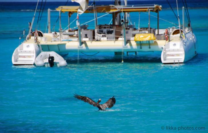 Bird-Caribbean-9.jpg