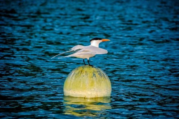 Bird-Caribbean-13.jpg