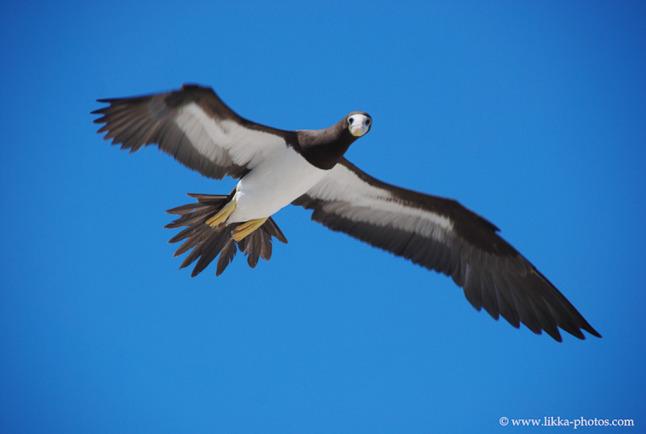 Bird-Caribbean-15.jpg