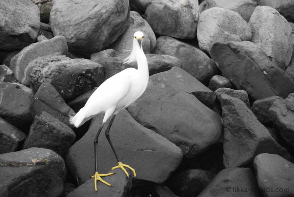 Bird-Caribbean-14.jpg