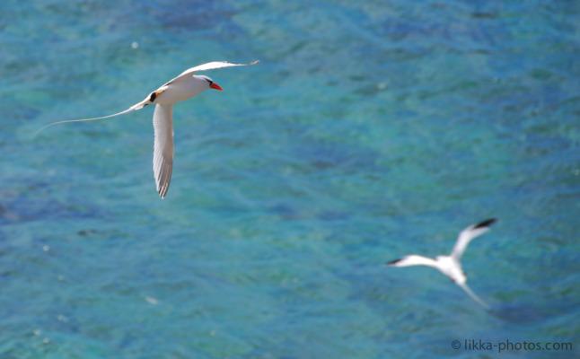 Bird-Caribbean-16.jpg