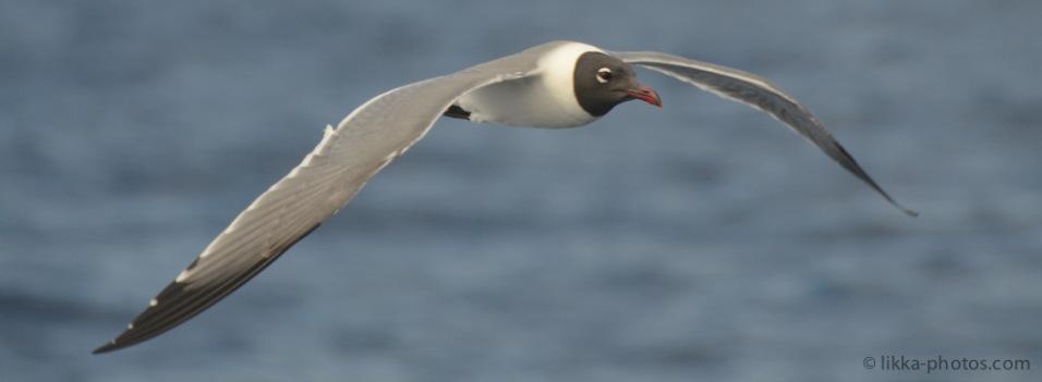 Bird-Caribbean-19.jpg