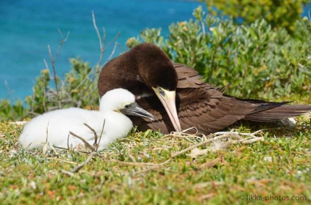 Bird-Caribbean-21.jpg