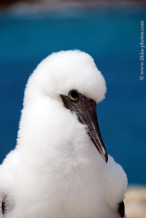 Bird-Caribbean-24.jpg