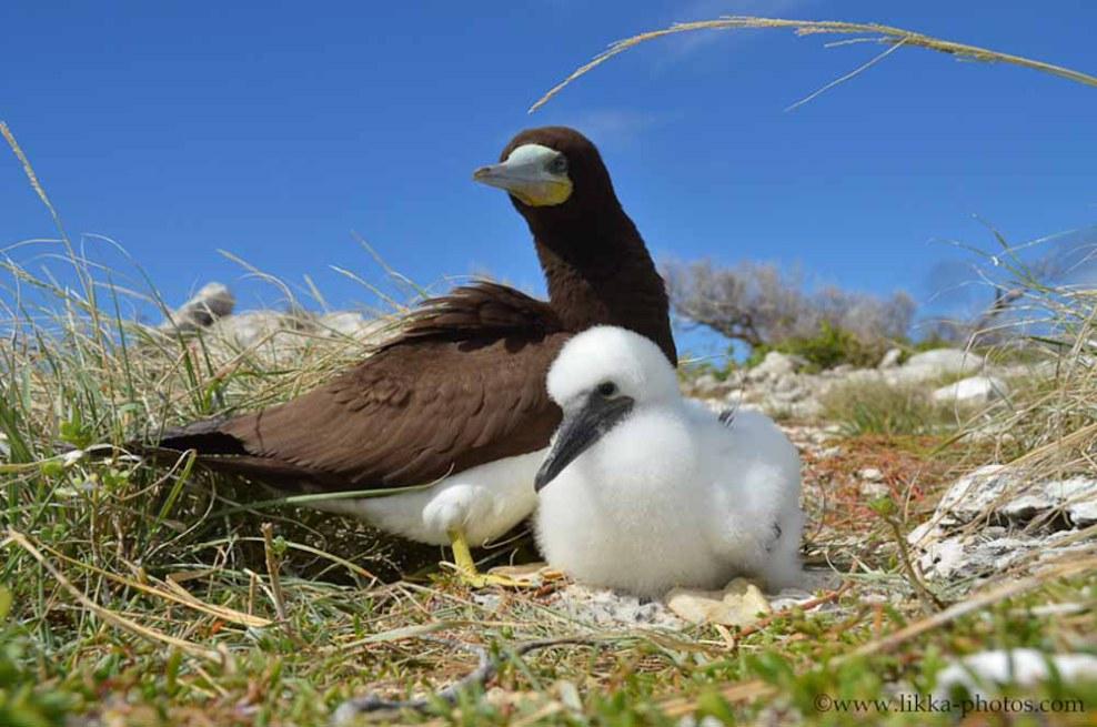 Bird-Caribbean-20.jpg