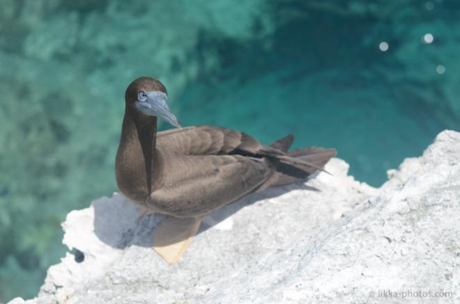Birds-Caribbean-12.jpg