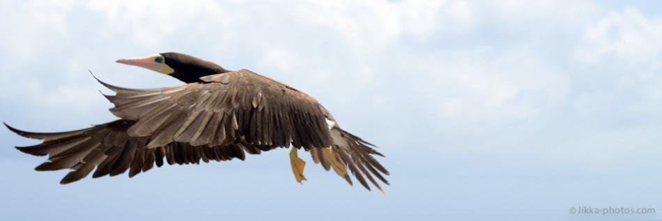 Birds-Caribbean-13.jpg