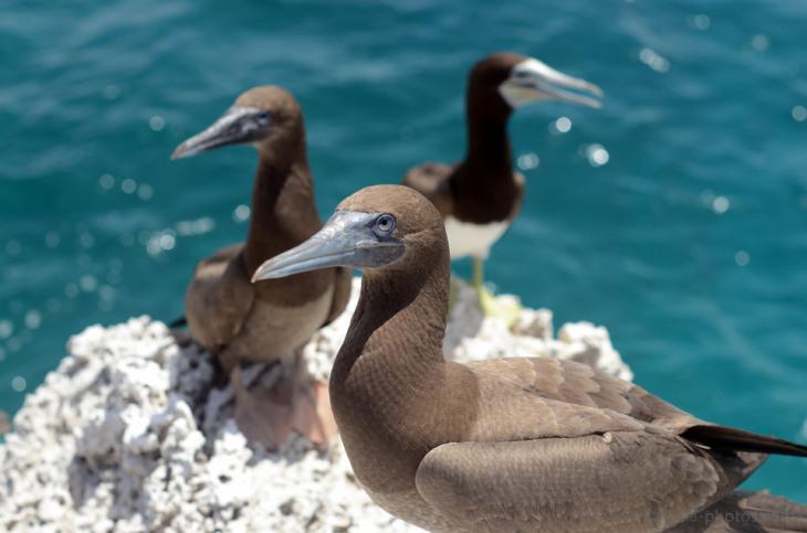 Birds-Caribbean-14.jpg