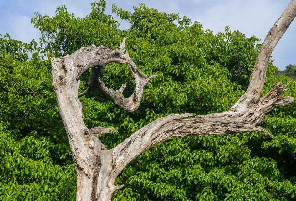 Birds-Caribbean-15.jpg