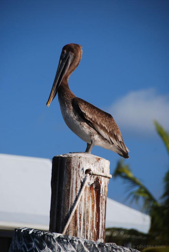 Birds-Caribbean-19.jpg