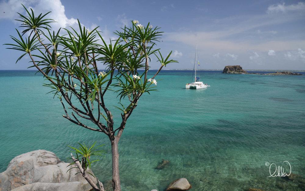 caribbean-likka-21.jpg