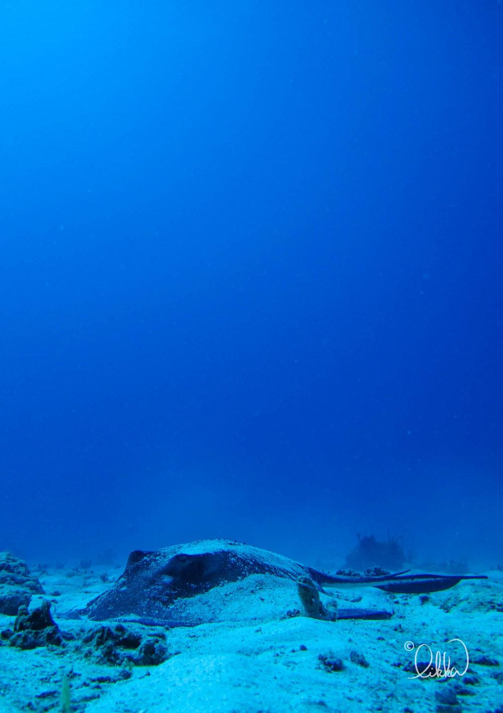 blue-likka-21.jpg