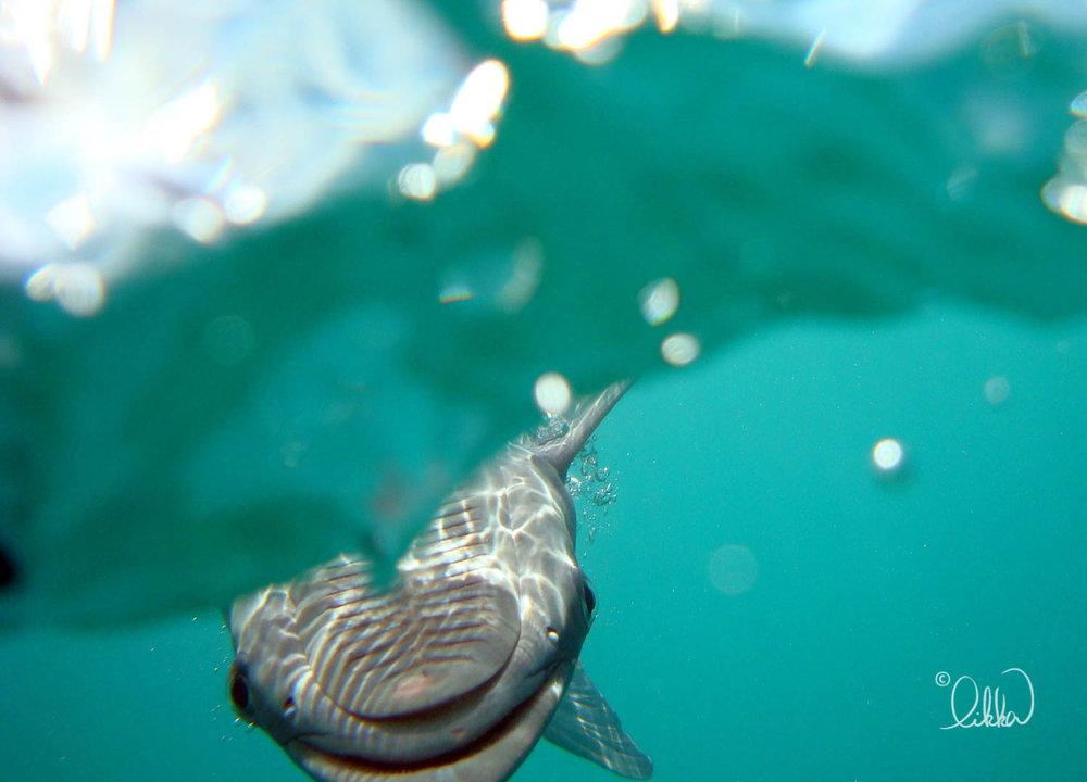 underwater-snorkeling-fish-likka-3.jpg