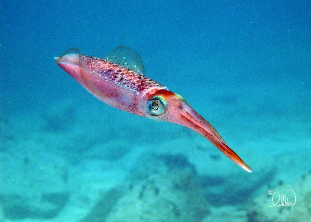 underwater-snorkeling-fish-likka-5.jpg