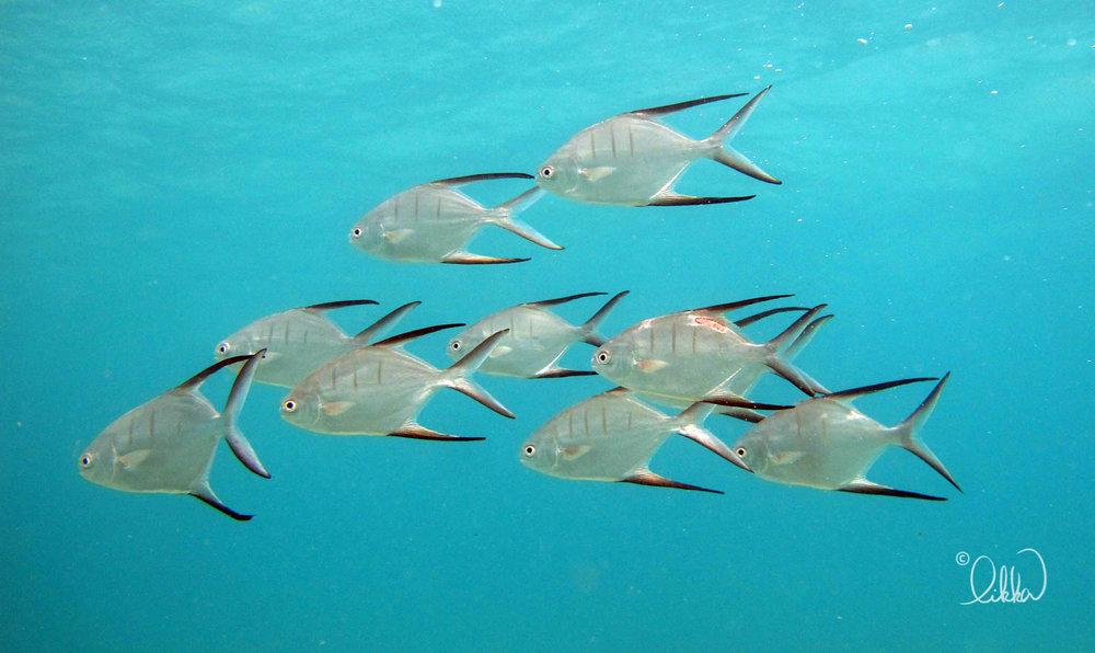 underwater-snorkeling-fish-likka-25.jpg