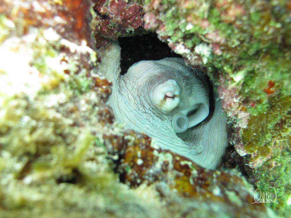 underwater-snorkeling-fish-likka-47.jpg