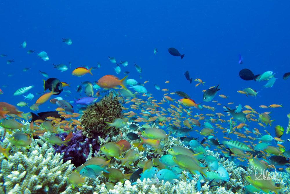 underwater-snorkeling-fish-likka-51.jpg
