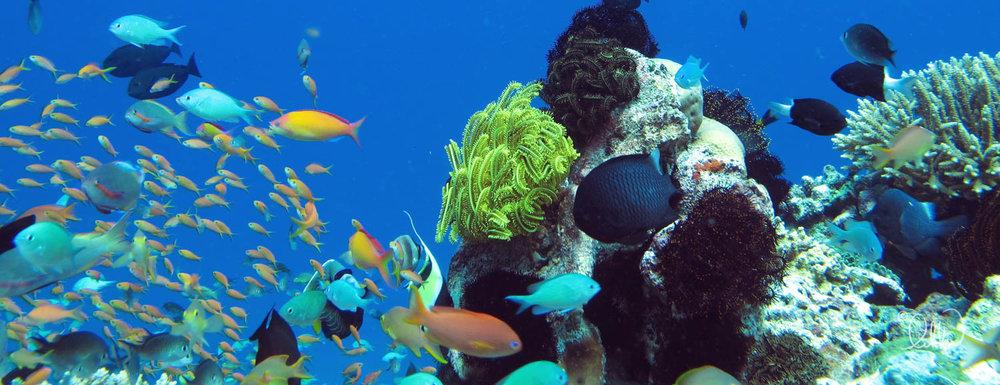underwater-snorkeling-fish-likka-52.jpg
