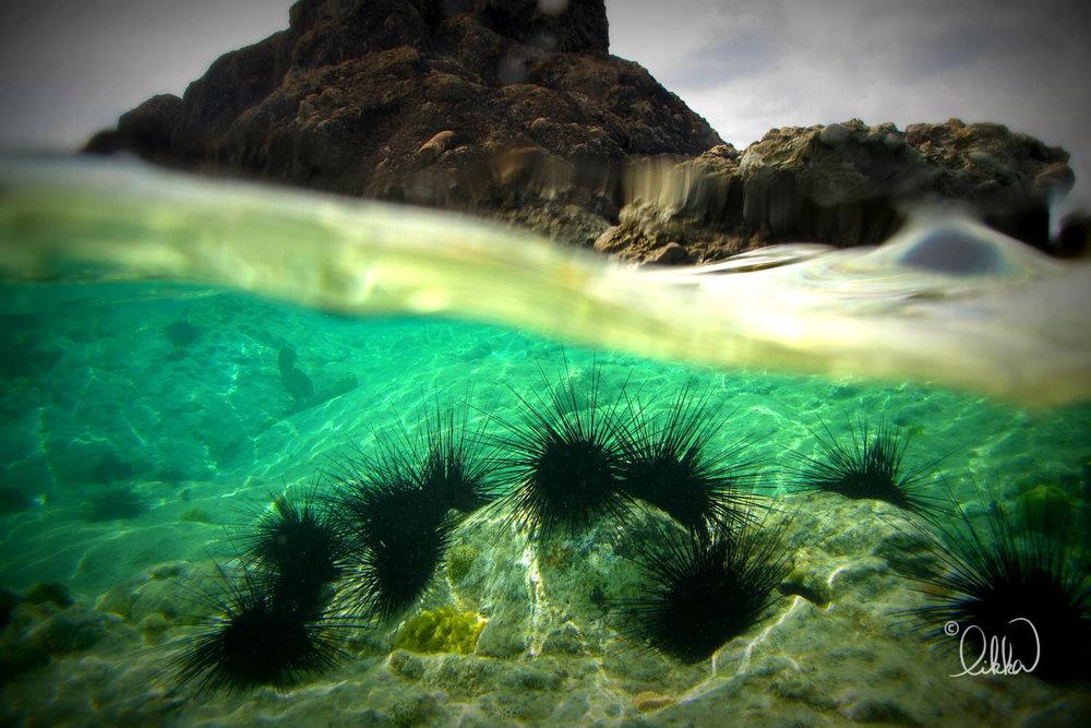 underwater-snorkeling-fish-likka-69.jpg