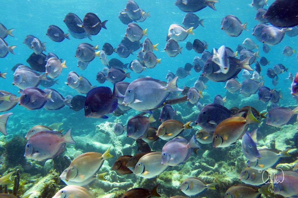 underwater-snorkeling-fish-likka-76.jpg
