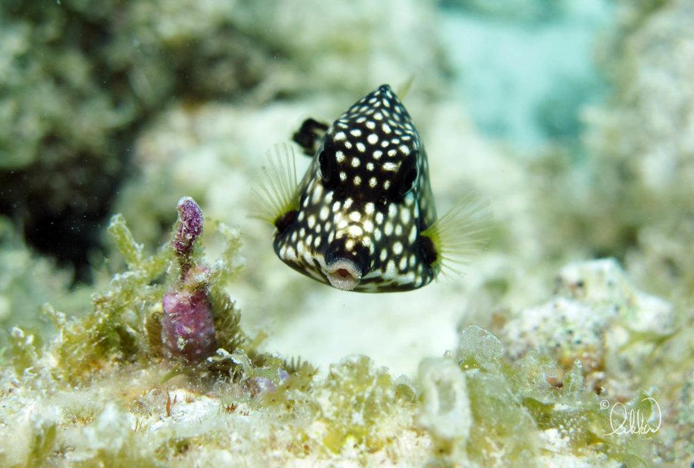 underwater-snorkeling-fish-likka-87.jpg