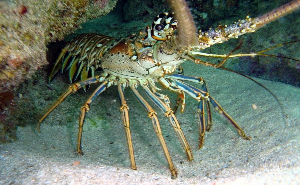 underwater-snorkeling-fish-likka.jpg