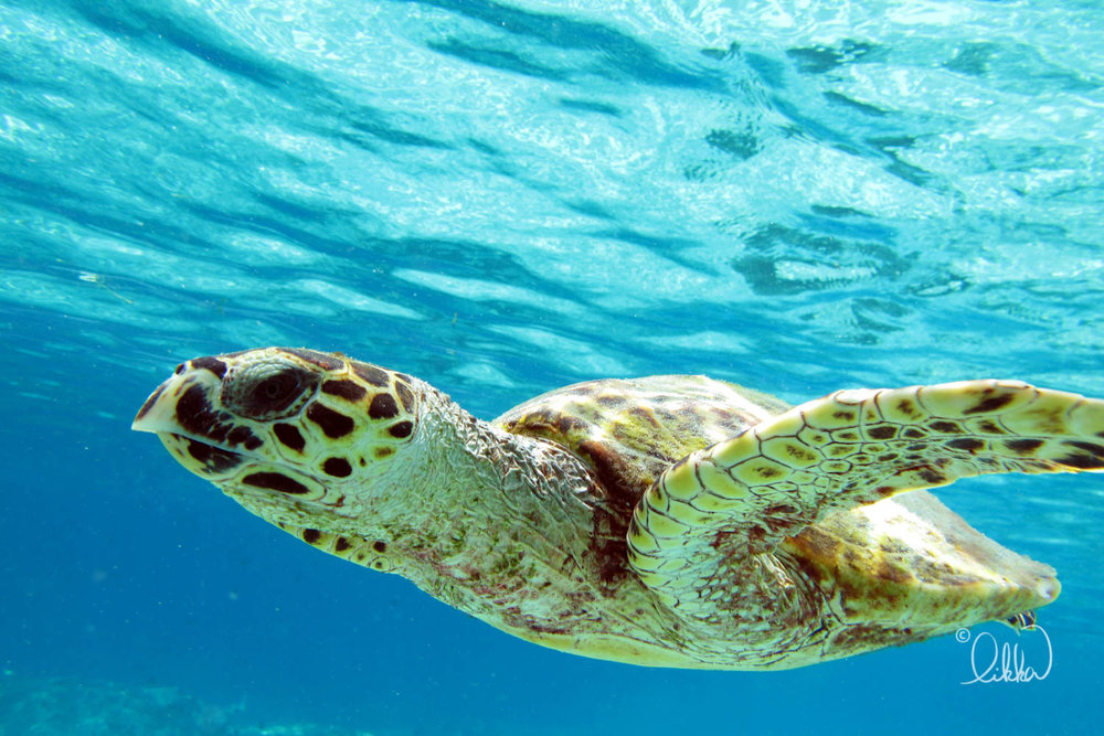 underwater-snorkeling-fish-likka-58.jpg
