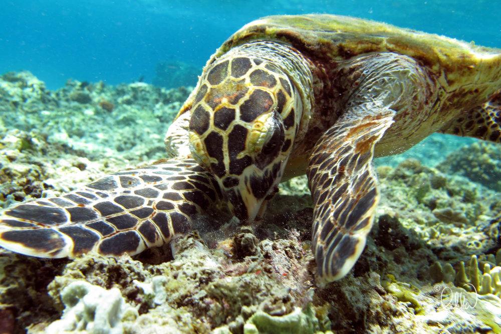 underwater-snorkeling-fish-likka-54.jpg
