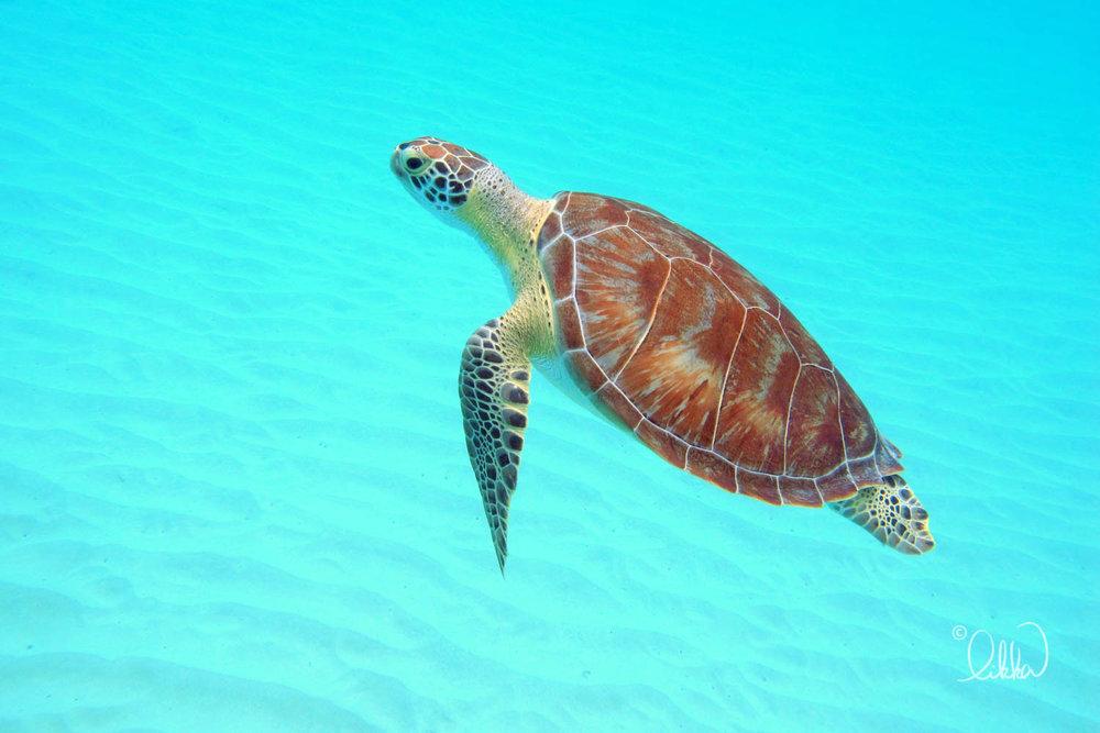 underwater-snorkeling-fish-likka-71.jpg