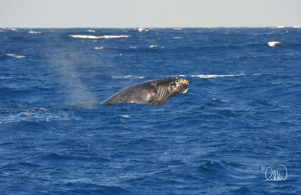 whales-sharks-dolphins-likka-12.jpg