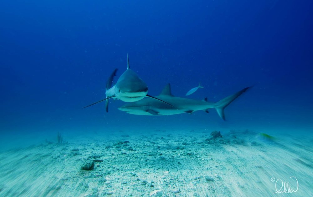 whales-sharks-dolphins-likka-27.jpg
