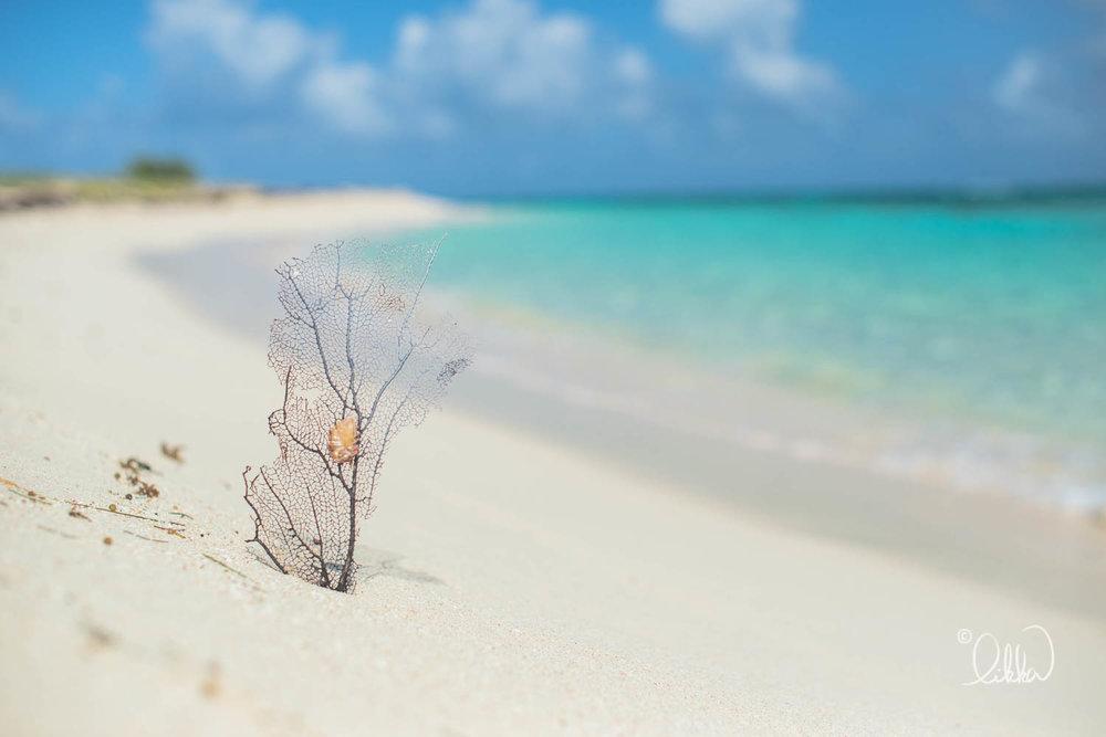 beach-likka-37.jpg