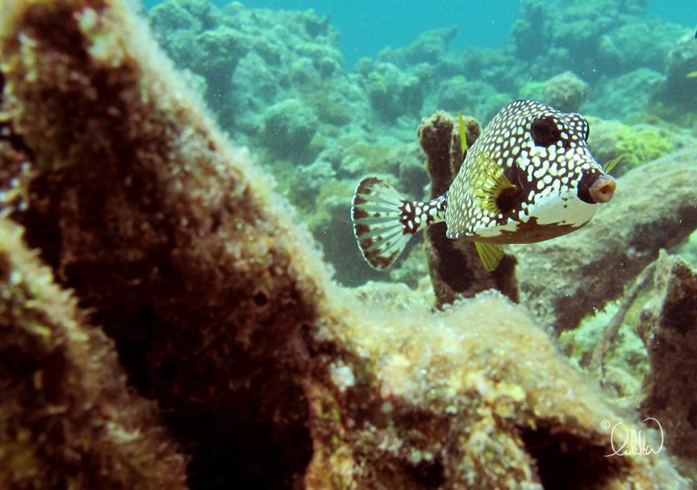 underwater-snorkeling-fish-likka-13.jpg