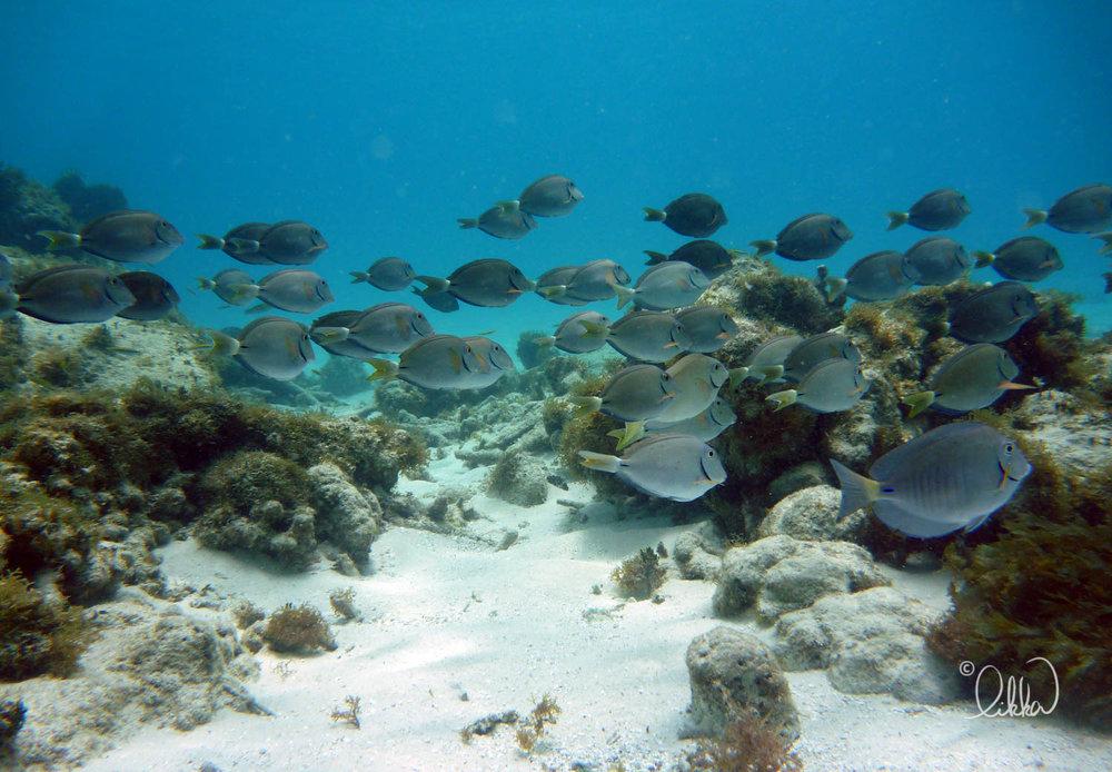 underwater-snorkeling-fish-likka-14.jpg