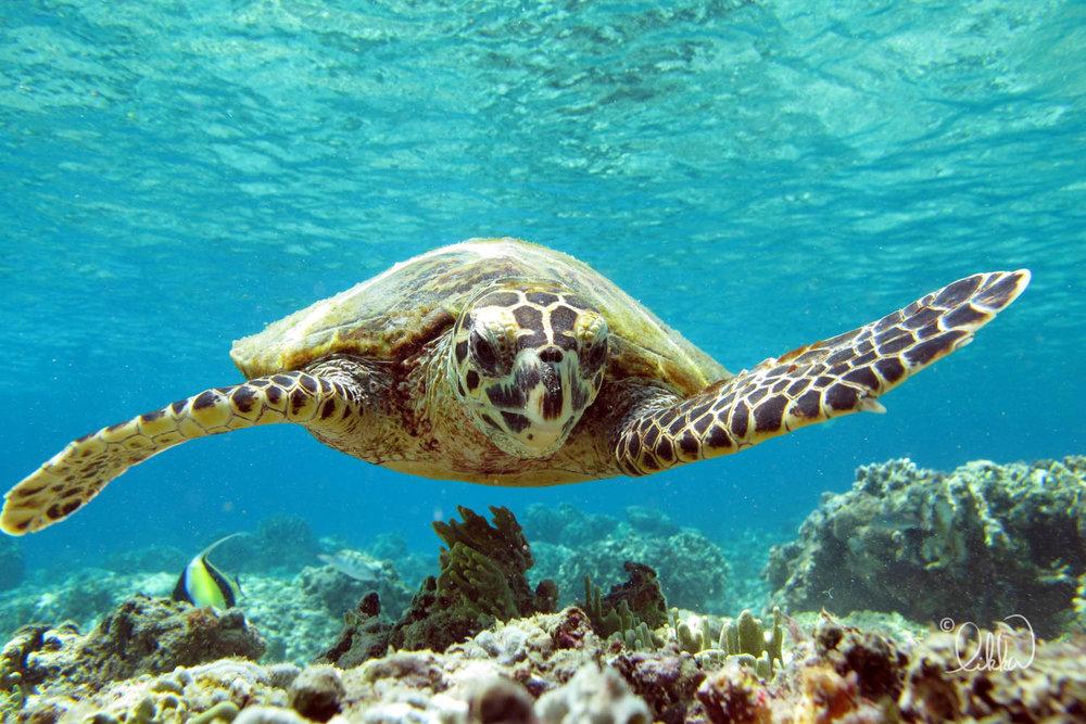 underwater-snorkeling-fish-likka-56.jpg