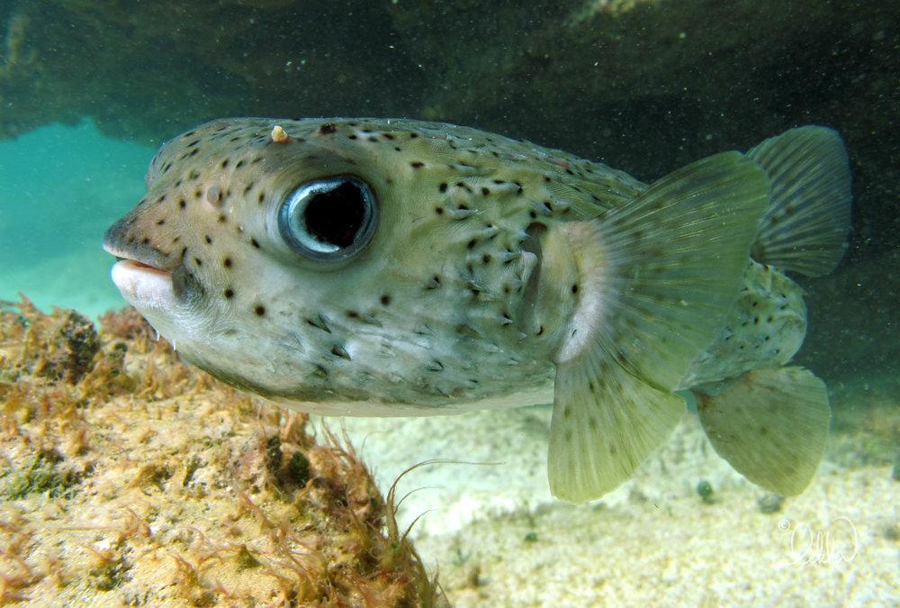 underwater-snorkeling-fish-likka-20.jpg