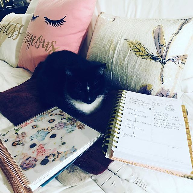 Currently jealous of my sleeping cat while fine tuning the conceptual model for my dissertation. The end is SO close and yet there is still SO much to do🤓👩🏽🔬 #gradlife #phdlife #dissertation #dissertationgrind #plannergirl #planneraddict #plannernerd #plannerbabe #plannercommunity  #blkwmnplan #eclifeplanner #wlec #daydesigner #daydesignermini #productivity #catsofinstagram #widn #catsofacademia