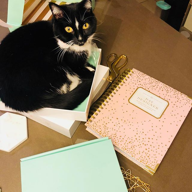 I 💛fast shipping from @belleandblush on their exclusive @thedaydesigner while Blue Ivy Marie💛the gorgeous packaging! #planneraddict #plannergirl #blkwmnplan #catsofig #dissertationlife #daydesigner #welldesignedlife #goalplanning #dailyplanner
