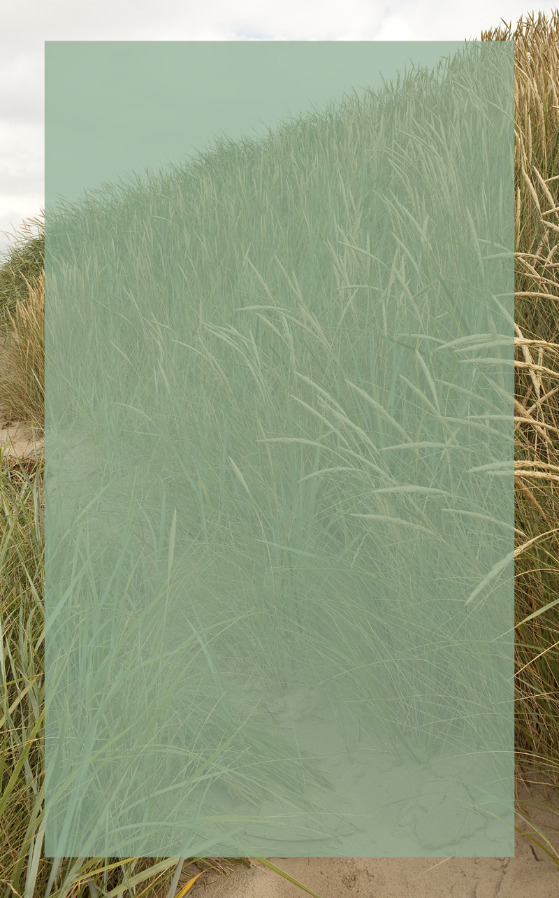 Dune_Grass_C_with_inset_800w.jpg