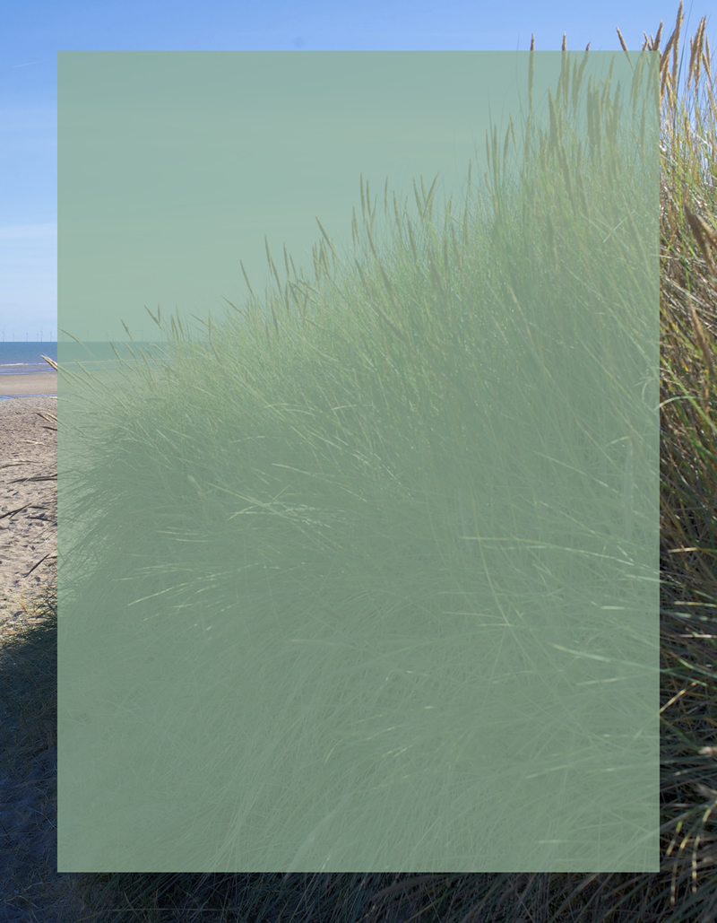 Dune_Grass_A_with_inset_800w.jpg
