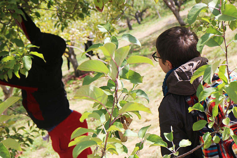 ApplePicking_0055.jpg