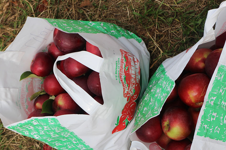 ApplePicking_0093.jpg