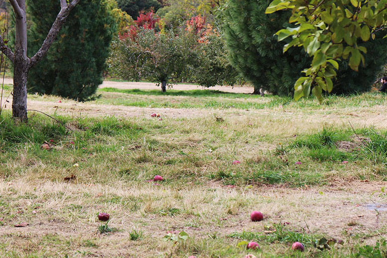 ApplePicking_0098.jpg