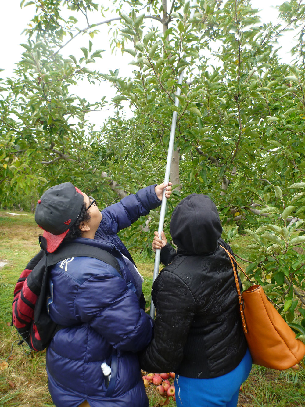 ApplePicking_074.jpg