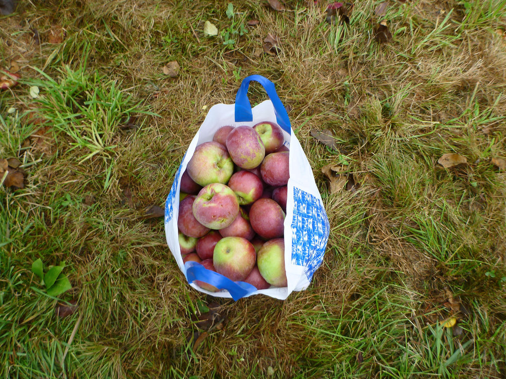 ApplePicking_093.jpg