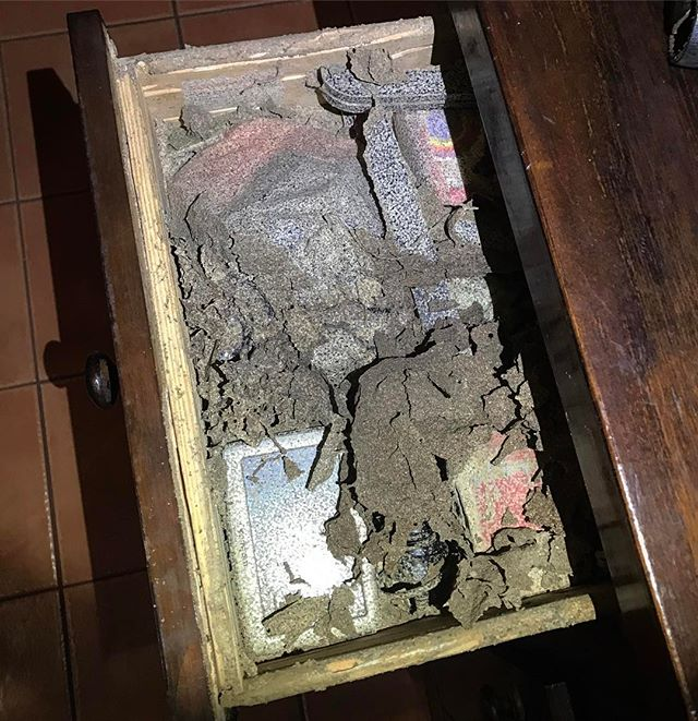 One of our customers had this termite nest in her cupboard...funny place to put it 😜 #termites #murwillumbah #uki #tweedvalley #goldcoast #pestcontrol #tweedheads #cabaritabeach #pottsville