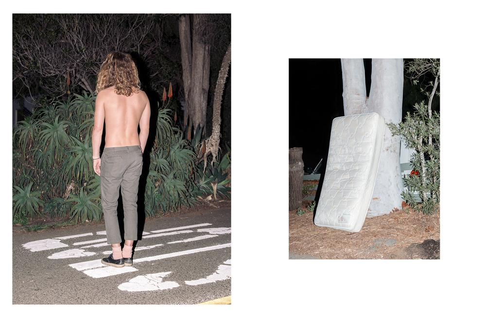 Night Plant_3.jpg